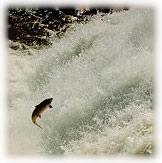 Tel le saumon, n'hésitez pas à aller contre courant... ;-)
